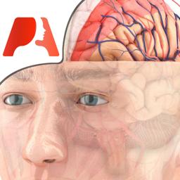 Pocket Brain - Interactive Neuroanatomy app icon