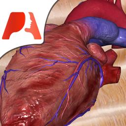 Pocket Heart app icon